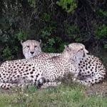 Photo de Shamwari Game Reserve Lodges