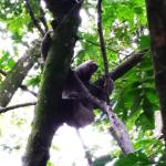 A sloth on the hotel grounds.