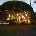 Banyan Tree at the Entrance to Ritz