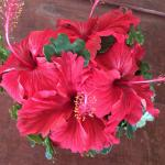 Hibiscus on our morning coffee table, replenished daily