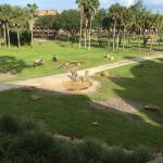 Animals from the hotel safari courtyard!