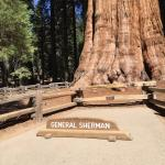 The General Sherman Giant Sequoia