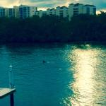 Dolphin swimming by the docks - view from Boat House Motel