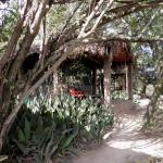 Photo of Fig Tree Camp