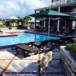 Pool area and hotel dog!