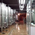 The winery on the ground floor