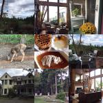 Collage of our stay