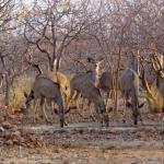 Photo de Etosha Village