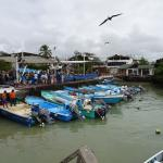 View on fishmarket