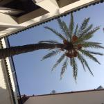 140 year palm tree rising up through the central courtyard