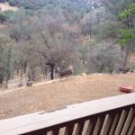 Photo of Yosemite Bed and Breakfast