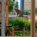 "our garden table view....with resident feline ""Bob"" in the gardens"