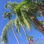 Beautiful days in Palm Springs