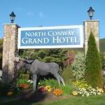 A Moose loose in the hotel grounds