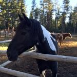 Beautiful horses of Camp Rich Corral
