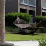 Hammock in pool area
