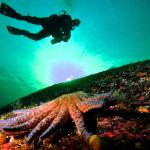 Pacific Pro Dive and Marine Adventures