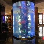the great fish tank in the lobby