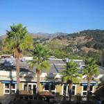 Palm Trees and Hills