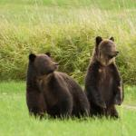 Tweedsmuir Park Lodge - Bella Coola Grizzly Bear Tours Foto