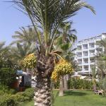 Caretta Beach Hotel Foto