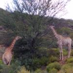 Madi-Madi Karoo Safari Lodge Foto