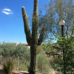 This is seen on the trail right behind the resort.