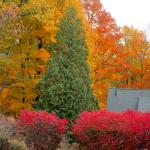 fabulous Fall colors in later October
