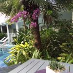 orchids at pool