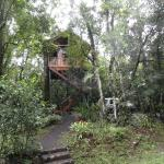 Our room in the treetops amongst the birds