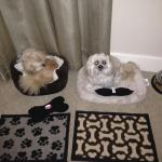 Plush accommodations for the puppies