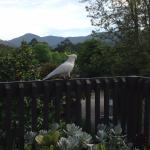 A visitor on the veranda of the main house.