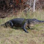 Big Cypress Swamp Tours