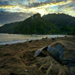 The majestic leatherback turtle on Grande Riviere Beach, right in front of the hotel