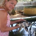 Boat ride and turtle watching in Bentota .....
