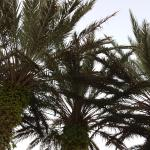 Palms in the front