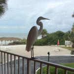 View from room. It is a real Egret