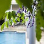 Wisterias by the pool.