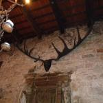 Stunning pair of  prehistoric Antlers in the gallery where we had food. Notice the Orbs above th
