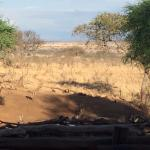 Water buck at the watering hole