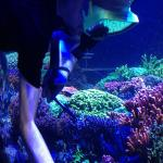 Really neat place to visit and lots to see if you sit down, relax, and day dream. Found Dory and