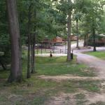 View of road inside campground from our cabin