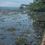 Dirty backwaters. Dying plants.