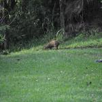Animal on the grounds at Rainbow Valley Lodge