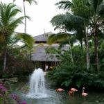 Photo of Iberostar Bavaro Suites