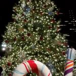 The Christmas Tree in Sundance Square