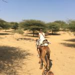 Roopo Camel Tours - Day Tours