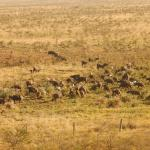 Herd of Buffaloes spotted from our Waterhole Bar