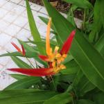 Sample of flora in and around the hotel