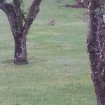 Wildlife right outside